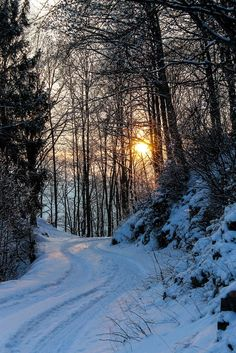 winter forest sunset