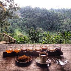 Bali pulina in Gianyar, Bali ( Coffee Plantation) | CUPPING in BALI | re-pin by http://www.cupkes.com/