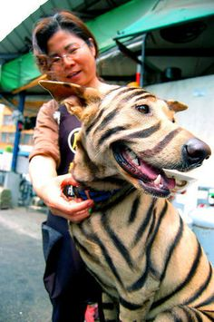 more tiger stripes!