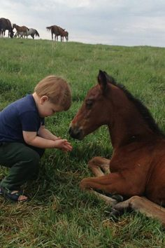 a boy and his colt