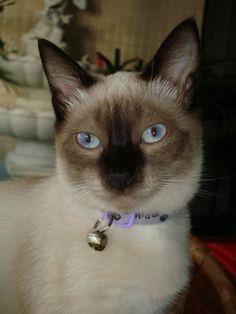 Sweet cat of mine...