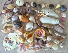 """Every beautiful shell from the sea is a treasured gift"" - I've said that countless times after admiring the amazing architecture, color and patterns of shells and bling that have washed up at my f...."