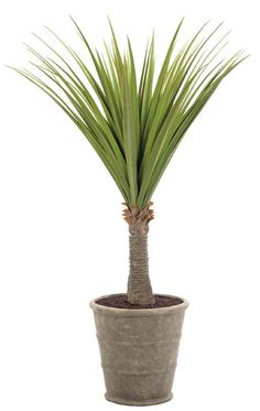 Natural Decorations, Inc. - Pandanus, Shown in Container G, Triple Rib Cement Grey