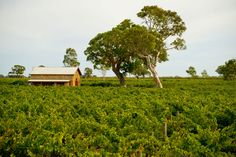Looking for somewhere to stay in South Australia? Choose from hotels, motels, apartments, bed and breakfasts, luxury accommodation, station stays and more.
