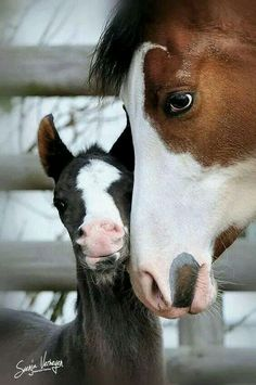 Horse & Foal - Friesenpferde u. Baby Horses, Cute Horses, Horse Love, Wild Horses, Horse Girl, All The Pretty Horses, Beautiful Horses, Animals Beautiful, Animals And Pets