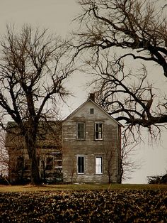 grey house framed by trees