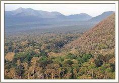 Kibwezi Forest