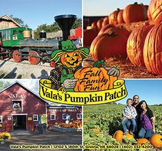 Vala's pumpkin patch half off deals
