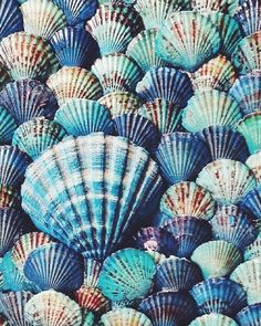 Shades of blue scallop sea shells + Collections + Beachy House Color Pallet. Shades of blue scallop sea shells + Collections + Beachy House Color Pallet. Shell Art, Sea Creatures, My Favorite Color, Textures Patterns, Color Patterns, Shades Of Blue, 50 Shades, Mother Nature, Bunt