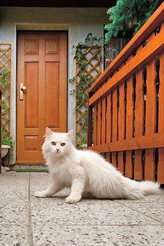 Nejmasivnější vchodové bezpečnostní dveře Next SD 102 odpovídají 3. bezpečnostní třídě a mají 19 jisticích bodů. I Love Cats, Cats And Kittens, Animals, Animales, Animaux, Animal Memes, Animal, Cat, Animais