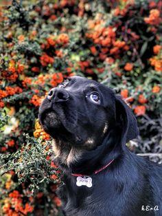 👀kızım yukarı bak diyorum gökyüzüne bakıyorsun👀 Neyse olcak , olcak 🐶😂🐶 #ẽ̆̃̅ #a̸̸̸̸̸̸̸̸̸̸̸̓ͧͬͪ͂̓ͧ̄̈̓̔ͮ̇̿̚ #instagram  #ınsta  #instadaily  #instafashion  #instagramers  #instagramhub  #instacollage  #instaphoto  #instadog  #rottweiler  #rotterdam  #rottweilers_of_instagram  #rottweilersofinstagram  #doğa  #nature  #natural  #naturalbeauty