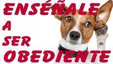 5 Trucos para Enseñar a un Perro a ser Obediente  (Entrenamiento en Obed...