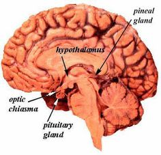 herbs for pineal gland Cheesy mumbo jumbo but still mentions hey out in sun for 30 minutes! And sleep in a dark room.