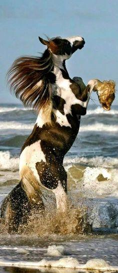 horses cavalos - Coleções - Google+