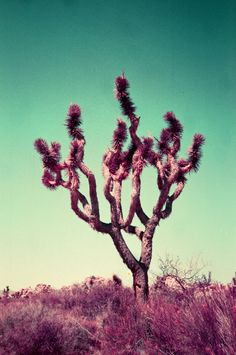 Lomography Magazine: Purple Places with Nick Collingwood — Nick Collingwood Vintage Tree Photography, Amazing Photography, Lomography, Saturated Color, Palm Springs, More Photos, Travel Photos, Around The Worlds, Magazine