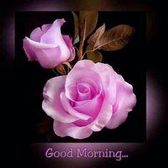 76+ Gambar Bunga Mawar Selamat Pagi Terlihat Keren
