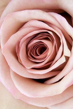 Pale pink! One of my colors :) this will be in my boquet for sure! Alone with pale blues and lavendars :)