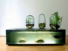 Mathieu Lehanneur Local River A storage unit for fish and greens. The setup can be considered as aquaponics as the plant extracts nutrients from the waste generated from fish. Aquarium Design, Wall Aquarium, Conception Aquarium, Bio Design, Home Storage Units, Theme Design, Mathieu Lehanneur, Feng Shui, Tutorial Diy
