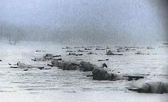 Counter attacking Siberian forces are pinned down by German resistance outside Moscow December 1941.