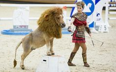 The mane act: A performing pony dressed up in a lion outfit gets through his routine with the help of a centurion during the Equestrian Grand Prix World Cup in Celje, Slovenia Funny Horses, Cute Horses, Beautiful Horses, Funny Animals, Cute Animals, Horse Halloween Ideas, Horse Halloween Costumes, Pet Costumes, Costumes For Horses