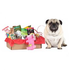 52% OFF the 1st Month of Bugsy's Box of Goodies for My sweet Otis and Kobe bear