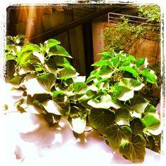 . Instagram Posts, Plants, Plant, Planets