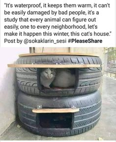 Feral Cat Shelter, Feral Cat House, Cat House Diy, Feral Cats, Cat Shelters, House 2, Cat Ideas, Funny Weather, Cat Toilet Training
