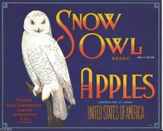 SNOW OWL 1920 AUTHENTIC YAKIMA WASHINGTON OLD APPLE CRATE LABEL L-16 #SNOWOWL Great design!  I would have enjoyed these apples all the more if they came in this box!