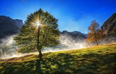 first day of fall season by Birdies Landscapes on 500px..... #autumn #yellow #trees #leaves #sky #blue #sun #light #beautiful #fall #shadow #green #sunstar