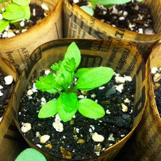 Gardener's To-Do List for March  http://www.rodalesorganiclife.com/garden/gardeners-do-list-march/page/0/4?amp%253Bamp%253Bcm_mmc=OGGazette-_-838642-_-03082012-_-gardeners_to_do_list_for_march