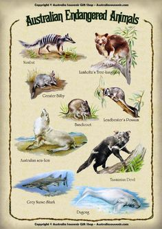 Australian Endangered Animals. The Australian government continues the fight to save the country's unique wildlife.
