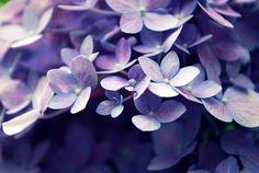 love those purple pearls...