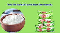 Taste the purity of Curd to boost your immunity