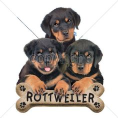 Puppies with Bone Biscuit Rottweiler Dog Womans T Shirt  10809