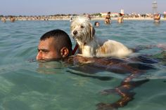 A dog named Lucky gets a ride on the back of his owner as he swims at the beach in the southern port city of Tyre, Lebanon.