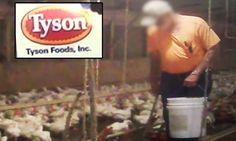 You didnt see that  Hidden Camera Exposes Horrible Secret of McDonalds and Tysons Chicken Farming (video)  HealthyTipsAdvice http://ift.tt/2pyuJZl