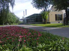 Tulipany obok Białostockiego Teatru Lalek Fot. Elżbieta Jaszczyszyn