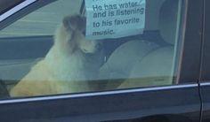 Un perro dejado solo dentro de un coche con un cartel para tranquilizar a la gente