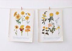 Vintage Flower Illustrations - yellow #folksy #peonyandthistle