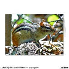 Cute Chipmunk in Forest Photo Card. #greetingcards #cards #chipmunks #animals #nature #animalgreetingcards #animalcards #naturecards #naturegreetingcards #cutecards #cutephotos #photos #photography #naturephotography
