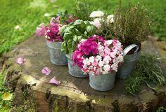 Ο τοπιογράφος απαντά Diy Planters, Planter Pots, Indoor Garden, Outdoor Gardens, Grandmas Garden, Rosalie, Plantar, Flower Beds, Love Flowers
