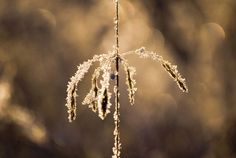 Frost and sun is the perfect combination! Photographer: Rebecca Erkenstam