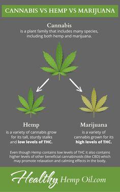 Cannabis vs Hemp vs Marijuana http://www.sunlightbioelectric.com/cbd/