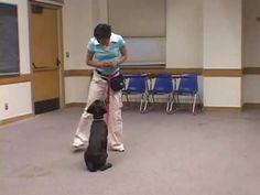 Handling Dominance Aggression in Dogs | Animal Behavior and Medicine Blog | Dr. Sophia Yin, DVM, MS