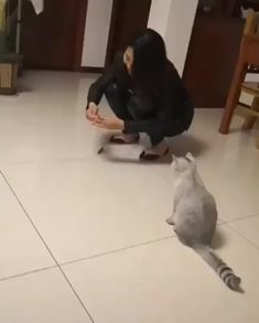 Australian Cat 🐈 🦘 Source by inspiringdad videos wallpaper cat cat memes cat videos cat memes cat quotes cats cats pictures cats videos Funny Animal Memes, Funny Animal Videos, Cute Funny Animals, Funny Animal Pictures, Cute Baby Animals, Cat Memes, Funny Cute, Funny Gifs, Cute Cats And Kittens