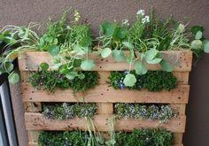 Vertical garden made in a pallet