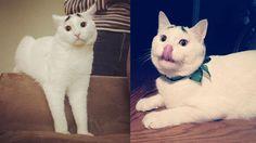 Kaşları olan kedi; Sam :)