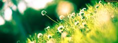 Green Grass and Flowers Photography Facebook Cover Preview