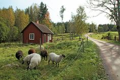 prettie-sweet: Rumskulla, Småland via: hagalundsfoto. Swedish Style, Swedish House, Country Life, Country Roads, Country Living, Voyage Suede, Scandinavian Countries, Sweden Travel, Red Cottage