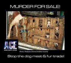Dog meat market. :-(